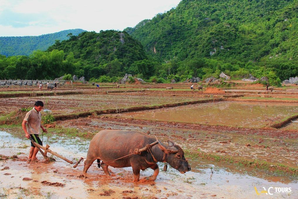 Campi-di-riso-in-Vietnam