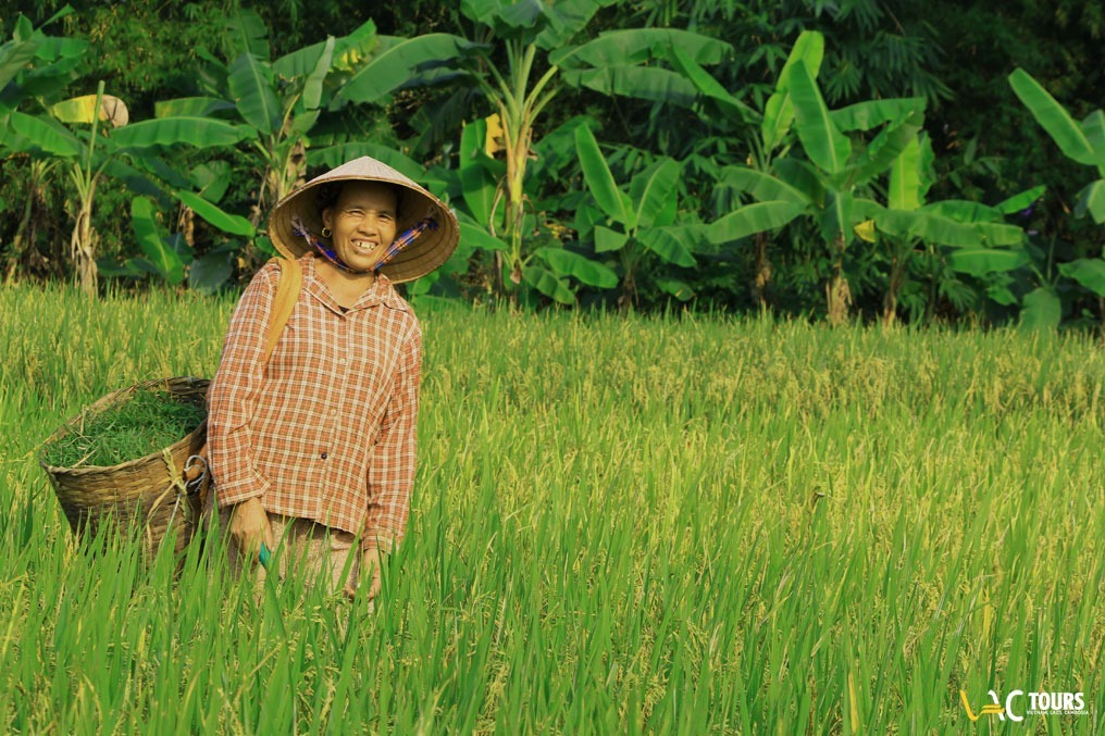 Le-risaie-del-Nord-del-Vietnam