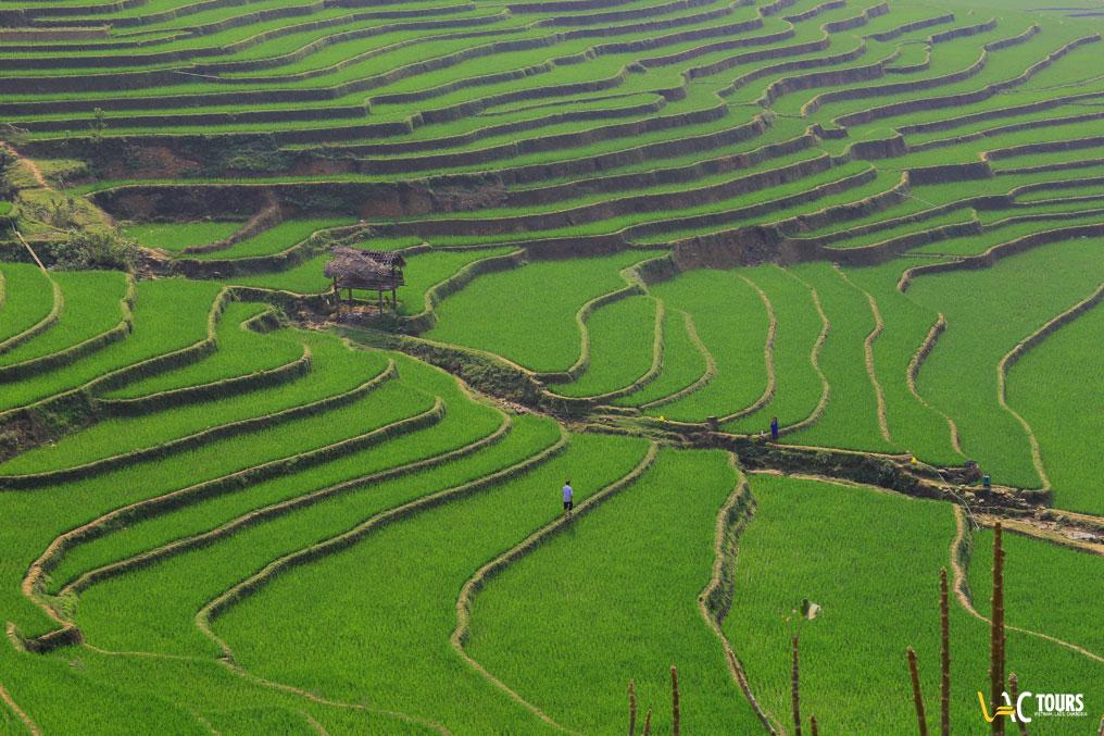 Le - terrazze - di - risaie - del- Nord- del-Vietnam
