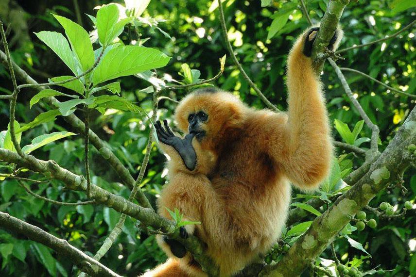 ninh-binh-scimme-nel-parco-nazionale-di-cuc-phuong